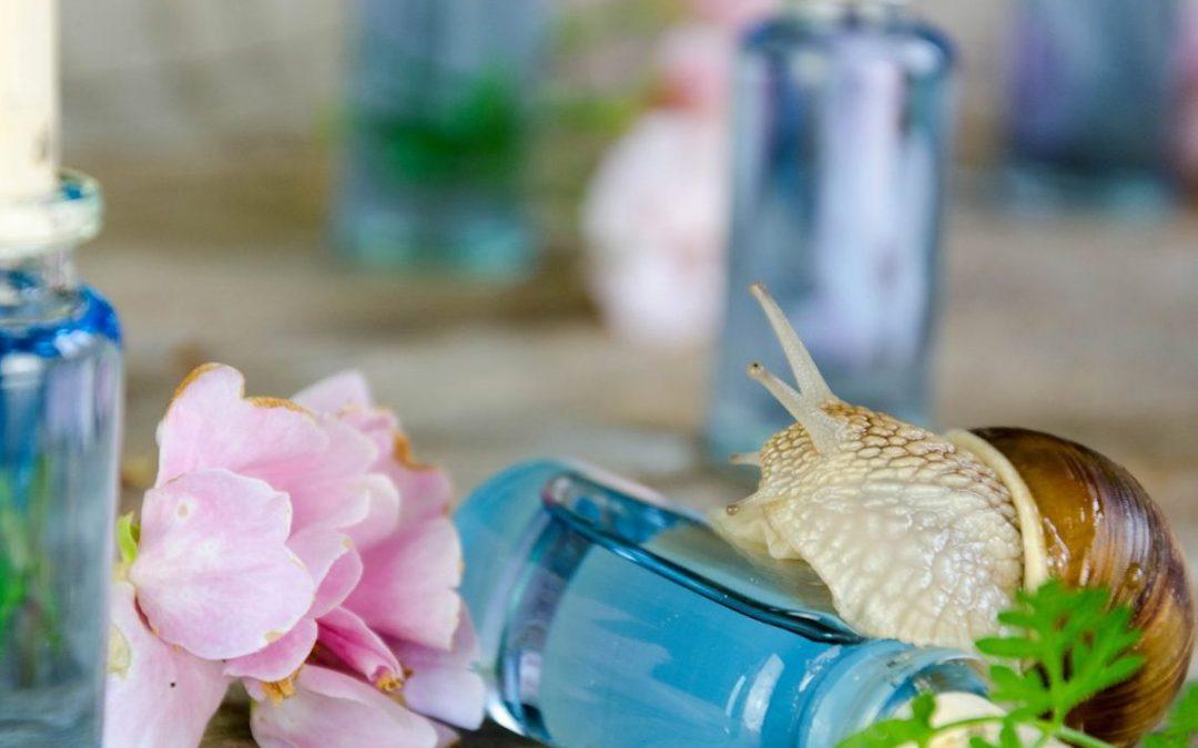 Les 6 actions de la bave d'escargot pour votre peau